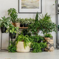 vasos-grandes-para-plantas